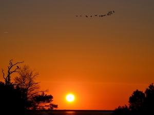 sunrise-and-birds